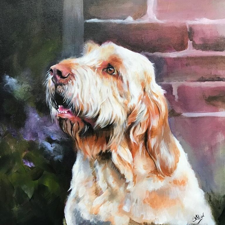 Acrylic portrait of an Italian Spinone