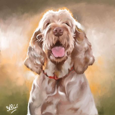 Digital Spinone portrait by kay prior