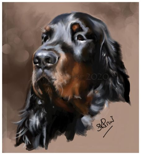 Digital portrait of a Gordon Setter By Kay Prior