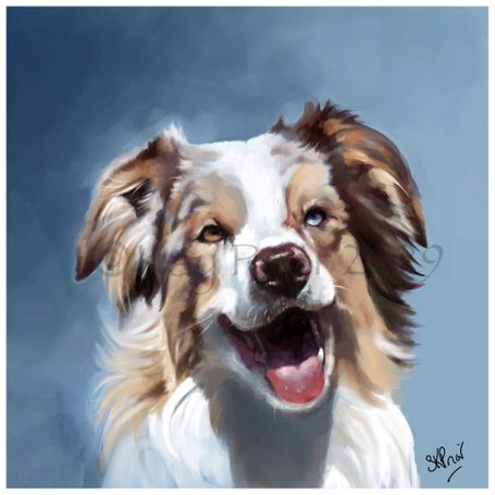 Border Collie digital portrait by Kay Prior